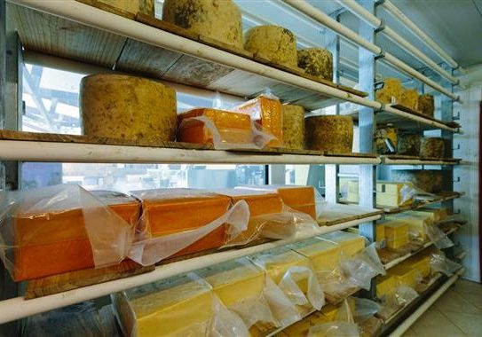 Pure Artisan Cheese on Shelves